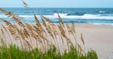 Sea Oats-Picture by James Lee